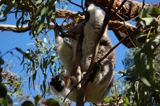 Travel to Phillip Island, Victoria | Extraordinary Days